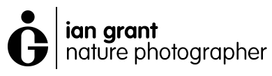 Ian Grant